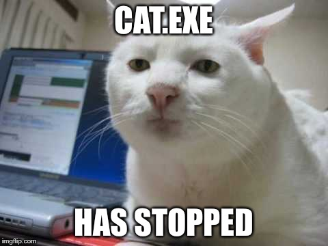 CAT.EXE | CAT.EXE HAS STOPPED | image tagged in srs,bruh,stop,why so serious | made w/ Imgflip meme maker