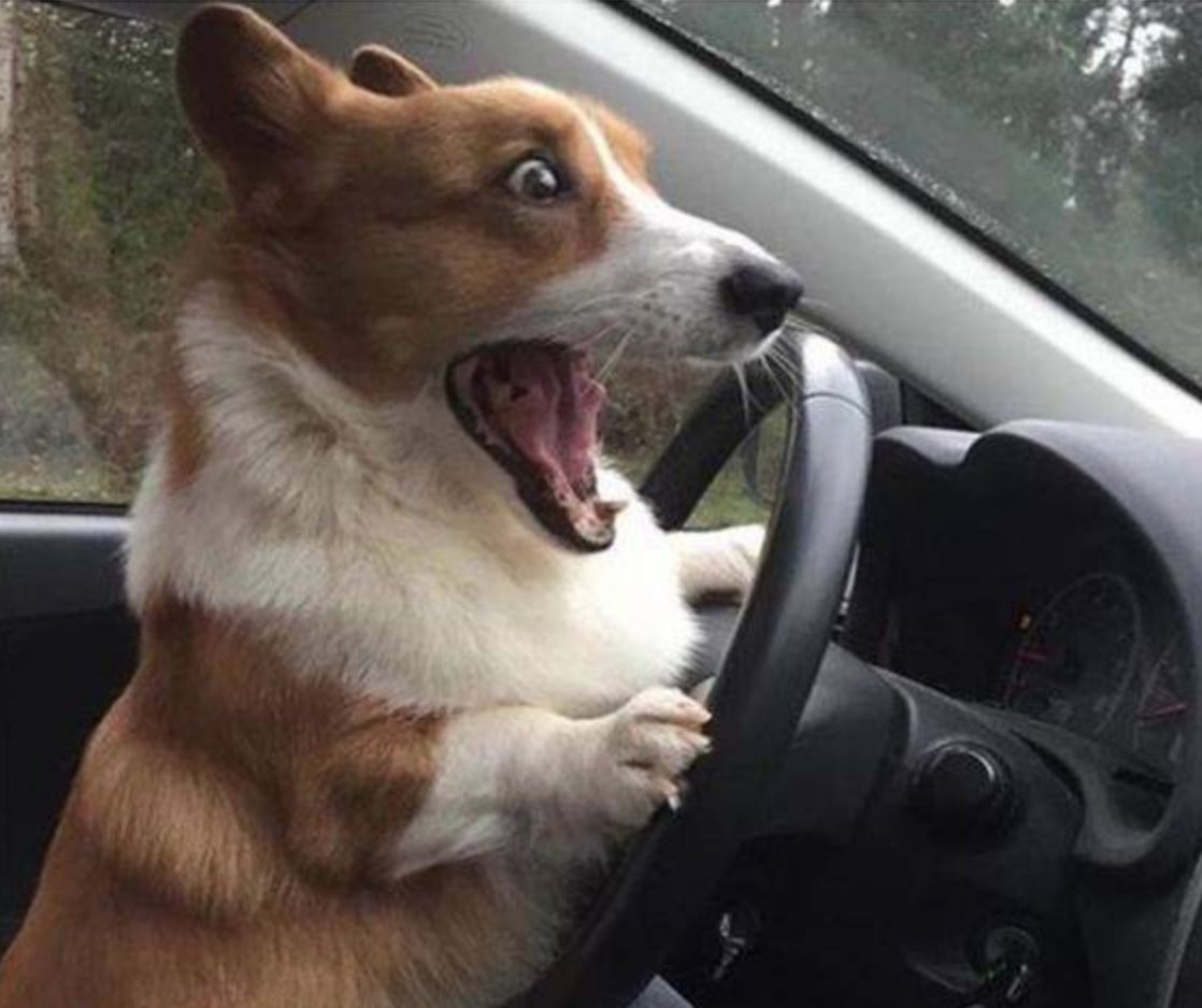 dog driving Blank Meme Template