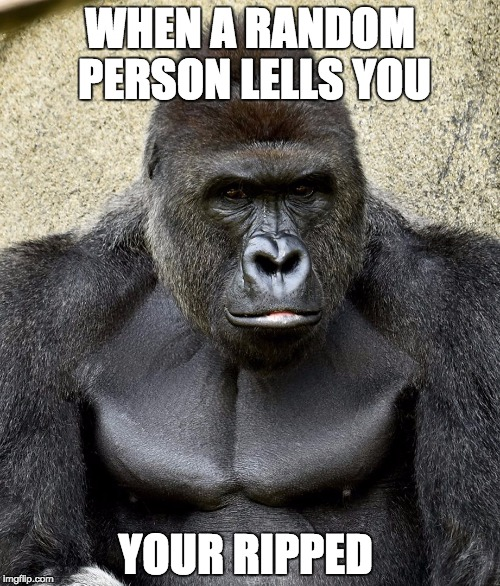 Harambe | WHEN A RANDOM PERSON LELLS YOU YOUR RIPPED | image tagged in harambe | made w/ Imgflip meme maker