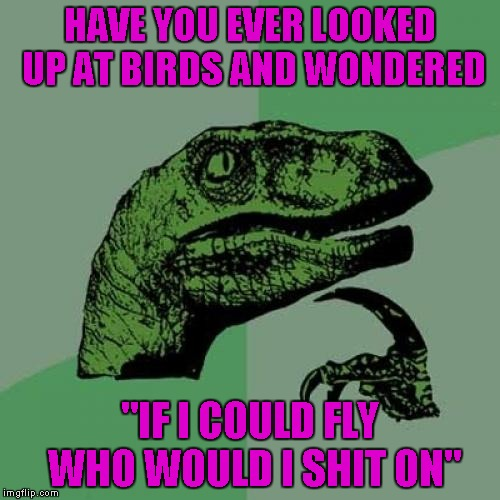 "I would settle for just being able to fly...shitting on people would be a BONUS!!! | HAVE YOU EVER LOOKED UP AT BIRDS AND WONDERED ""IF I COULD FLY WHO WOULD I SHIT ON"" 