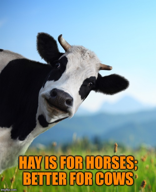 HAY IS FOR HORSES; BETTER FOR COWS | made w/ Imgflip meme maker