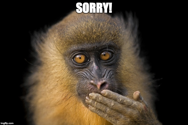 Monkey | SORRY! | image tagged in monkey | made w/ Imgflip meme maker