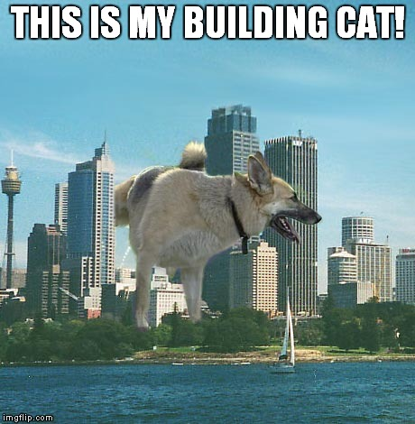 THIS IS MY BUILDING CAT! | made w/ Imgflip meme maker