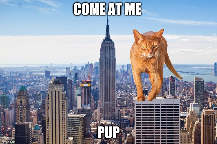 COME AT ME PUP | made w/ Imgflip meme maker
