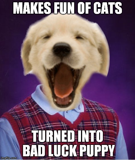 MAKES FUN OF CATS TURNED INTO BAD LUCK PUPPY | made w/ Imgflip meme maker