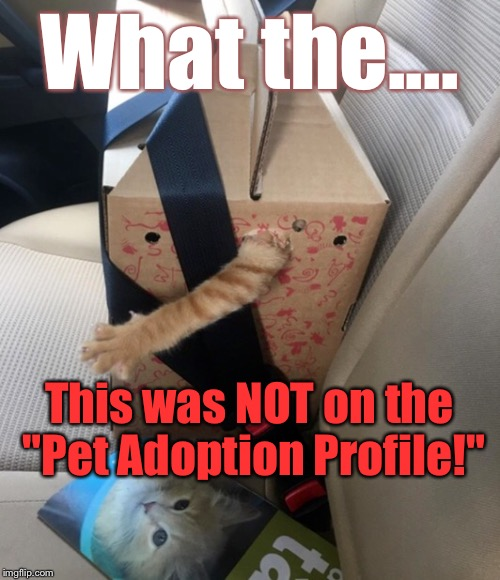 "This Is ONE Cat...You're Gonna Wanna Take BACK: | What the.... This was NOT on the ""Pet Adoption Profile!"" 