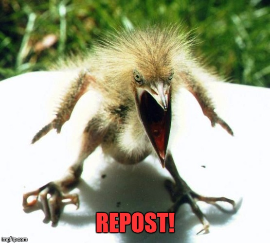 Unpleasant Bird | REPOST! | image tagged in unpleasant bird | made w/ Imgflip meme maker
