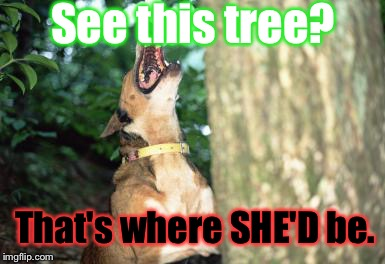 Dog Barking Up Tree | See this tree? That's where SHE'D be. | image tagged in dog barking up tree | made w/ Imgflip meme maker