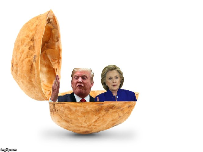 Donald Trump And Hillary Clinton in a Nutshell | image tagged in in a nutshell,boi | made w/ Imgflip meme maker