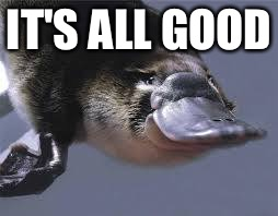 Platypus  | IT'S ALL GOOD | image tagged in platypus | made w/ Imgflip meme maker