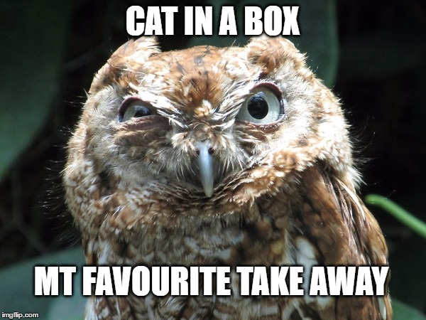 CAT IN A BOX MT FAVOURITE TAKE AWAY | image tagged in ornery owl | made w/ Imgflip meme maker