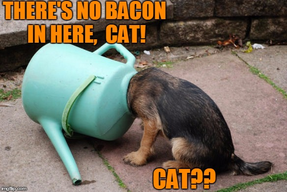 Dumb dog meme for DUMB meme week  :-) | THERE'S NO BACON IN HERE,  CAT! CAT?? | image tagged in oops | made w/ Imgflip meme maker