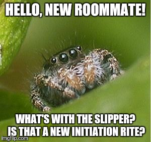 Misunderstood Spider | HELLO, NEW ROOMMATE! WHAT'S WITH THE SLIPPER? IS THAT A NEW INITIATION RITE? | image tagged in misunderstood spider | made w/ Imgflip meme maker
