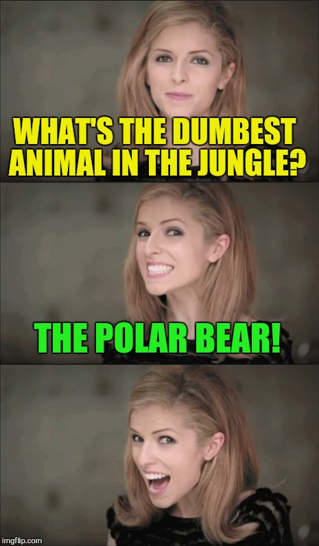 Dumb dumb dumb | WHAT'S THE DUMBEST ANIMAL IN THE JUNGLE? THE POLAR BEAR! | image tagged in memes,bad pun anna kendrick,dumb meme weekend,funny,laughs,jokes | made w/ Imgflip meme maker