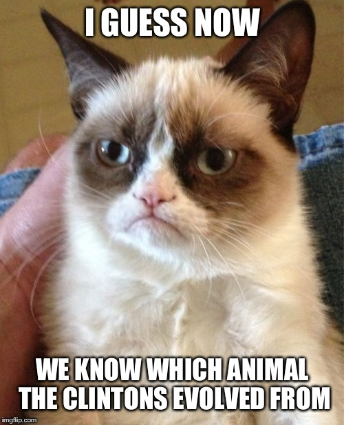 Grumpy Cat Meme | I GUESS NOW WE KNOW WHICH ANIMAL THE CLINTONS EVOLVED FROM | image tagged in memes,grumpy cat | made w/ Imgflip meme maker