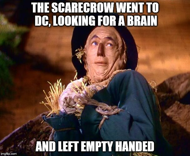 strawman | THE SCARECROW WENT TO DC, LOOKING FOR A BRAIN AND LEFT EMPTY HANDED | image tagged in strawman | made w/ Imgflip meme maker