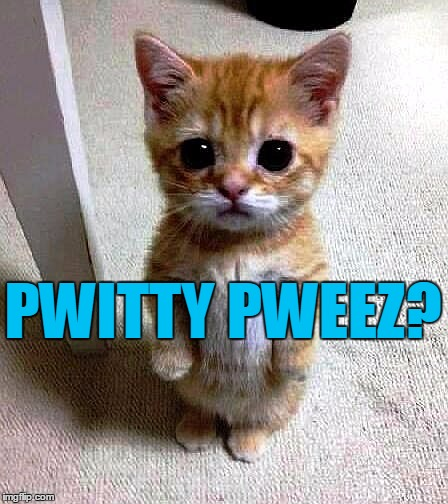 PWITTY PWEEZ? | image tagged in kitty | made w/ Imgflip meme maker