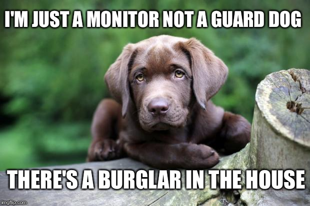 If you ever owned a lab.. You know this to be true | I'M JUST A MONITOR NOT A GUARD DOG THERE'S A BURGLAR IN THE HOUSE | image tagged in chocolate lab | made w/ Imgflip meme maker