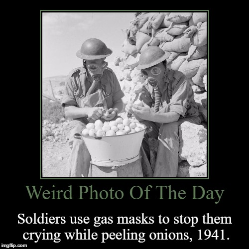 That's Actually A Pretty Smart Idea | Weird Photo Of The Day | Soldiers use gas masks to stop them crying while peeling onions, 1941. | image tagged in funny,demotivationals,weird,photo of the day,gas mask,onions | made w/ Imgflip demotivational maker