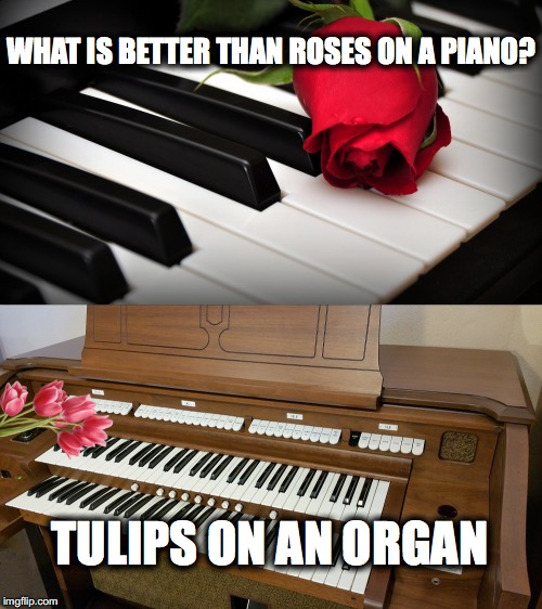 What's Better Than Roses on a Piano | WHAT IS BETTER THAN ROSES ON A PIANO? TULIPS ON AN ORGAN | image tagged in piano,tulips,two lips,organ | made w/ Imgflip meme maker
