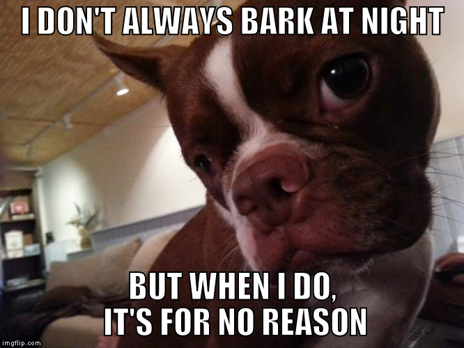 I DON'T ALWAYS BARK AT NIGHT BUT WHEN I DO, IT'S FOR NO REASON | image tagged in boston terrier | made w/ Imgflip meme maker