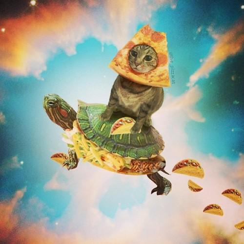 1cxhga?a413664 pizza cat taco turtle meme generator imgflip,Turtle Meme Generator