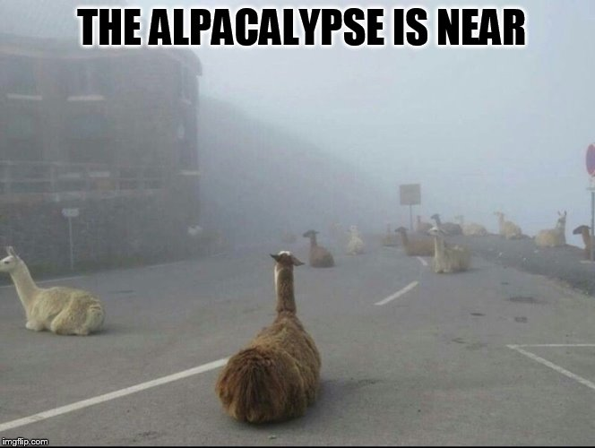 I know the  alpacalypse  has been done before, but I couldn't resist this picture!  | THE ALPACALYPSE IS NEAR | image tagged in alpacalypse,apocalypse,funny meme,laughs,the end is near,been done before | made w/ Imgflip meme maker