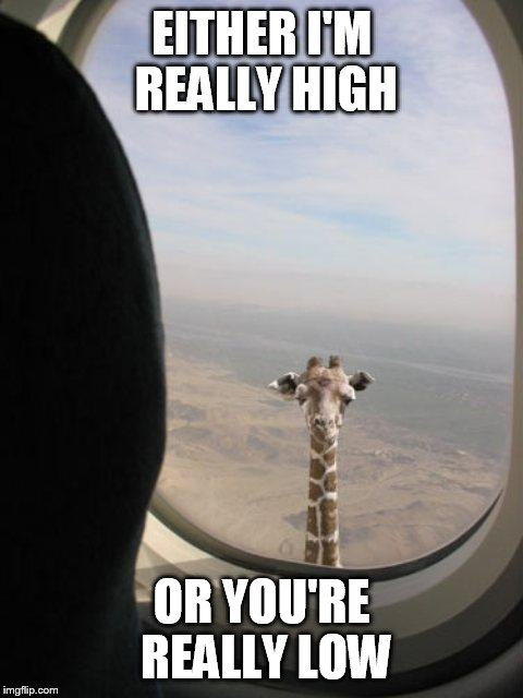 I'm really sticking my neck out for this one | EITHER I'M REALLY HIGH OR YOU'RE REALLY LOW | image tagged in giraffe shit | made w/ Imgflip meme maker