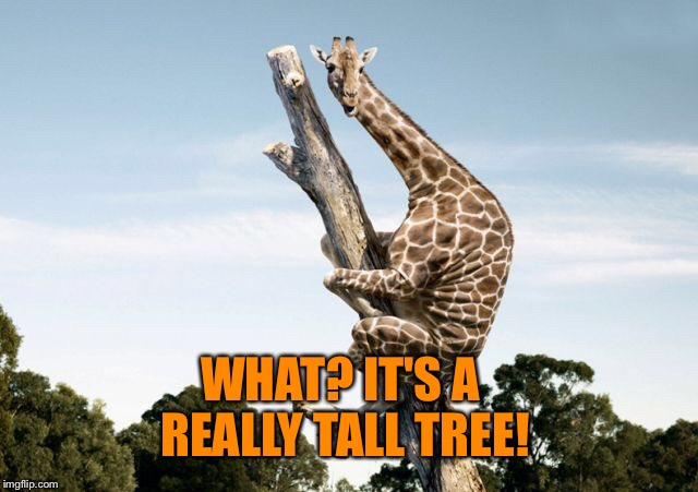 WHAT? IT'S A REALLY TALL TREE! | made w/ Imgflip meme maker