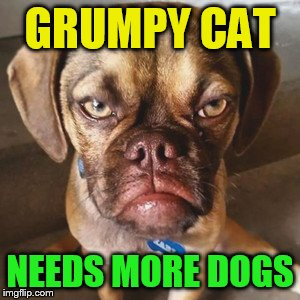 GRUMPY CAT NEEDS MORE DOGS | made w/ Imgflip meme maker