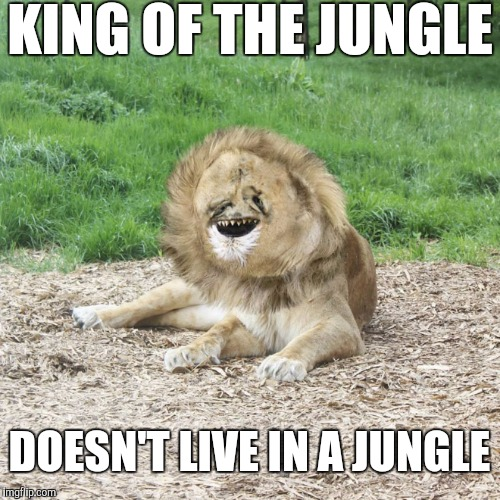 Poor Guy | KING OF THE JUNGLE DOESN'T LIVE IN A JUNGLE | image tagged in harold the lion | made w/ Imgflip meme maker