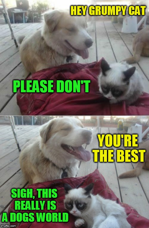 Grumpy Cat and his dog | HEY GRUMPY CAT PLEASE DON'T YOU'RE THE BEST SIGH, THIS REALLY IS A DOGS WORLD | image tagged in grumpy cat and his dog | made w/ Imgflip meme maker
