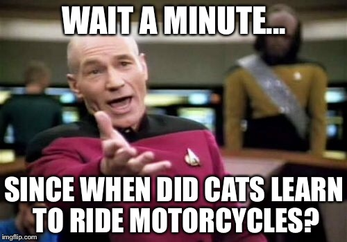 Picard Wtf Meme | WAIT A MINUTE... SINCE WHEN DID CATS LEARN TO RIDE MOTORCYCLES? | image tagged in memes,picard wtf | made w/ Imgflip meme maker