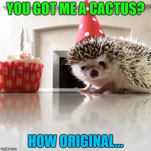 Some people have no imagination :) | YOU GOT ME A CACTUS? HOW ORIGINAL... | image tagged in birthday hedgehog,memes,animals,cactus,plants,birthday | made w/ Imgflip meme maker
