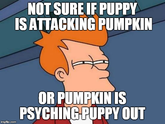 Futurama Fry Meme | NOT SURE IF PUPPY IS ATTACKING PUMPKIN OR PUMPKIN IS PSYCHING PUPPY OUT | image tagged in memes,futurama fry | made w/ Imgflip meme maker