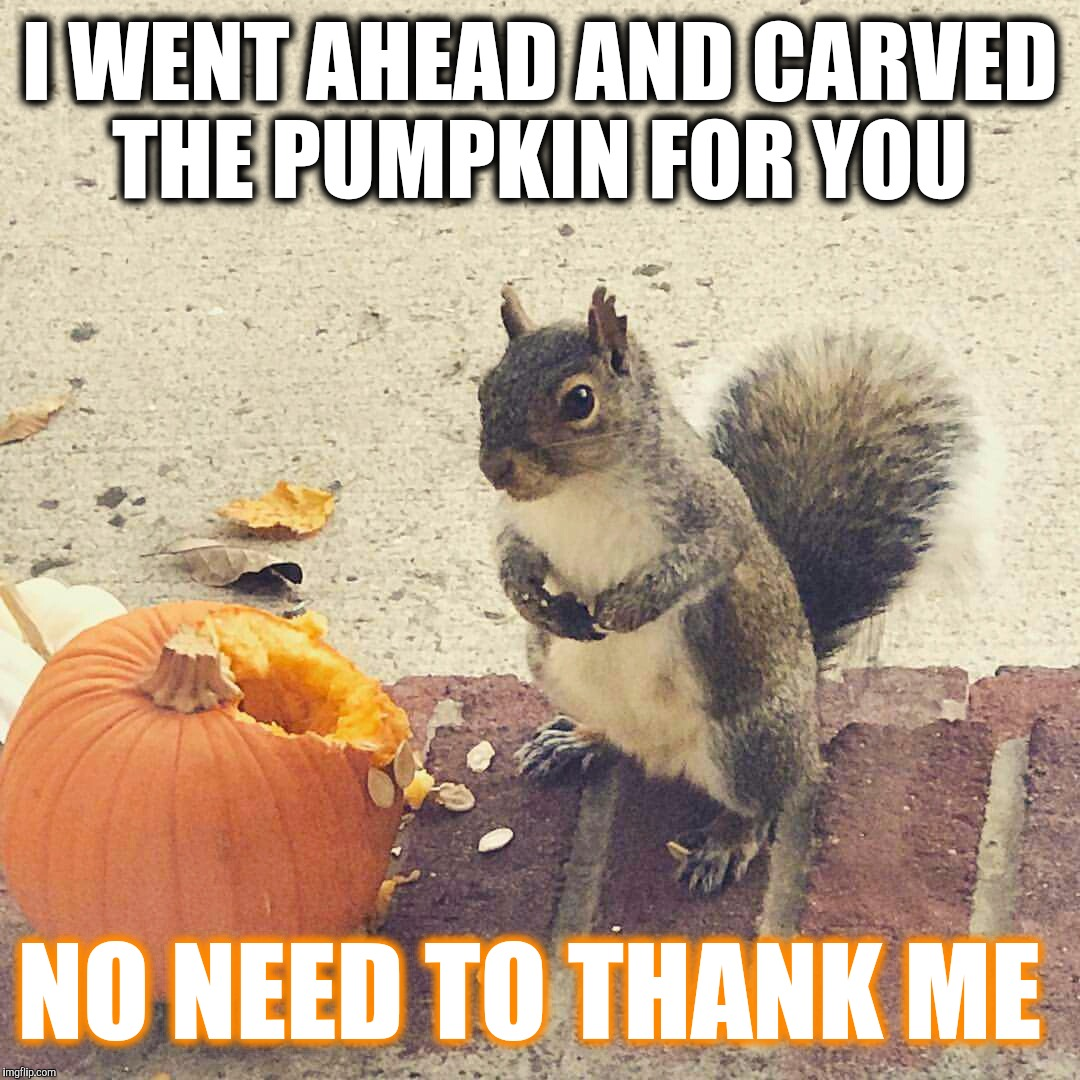 I carved your pumpkin  | I WENT AHEAD AND CARVED THE PUMPKIN FOR YOU NO NEED TO THANK ME | image tagged in squirrel and pumpkin,funny memes,funny,fall,cute animals,pumpkin | made w/ Imgflip meme maker
