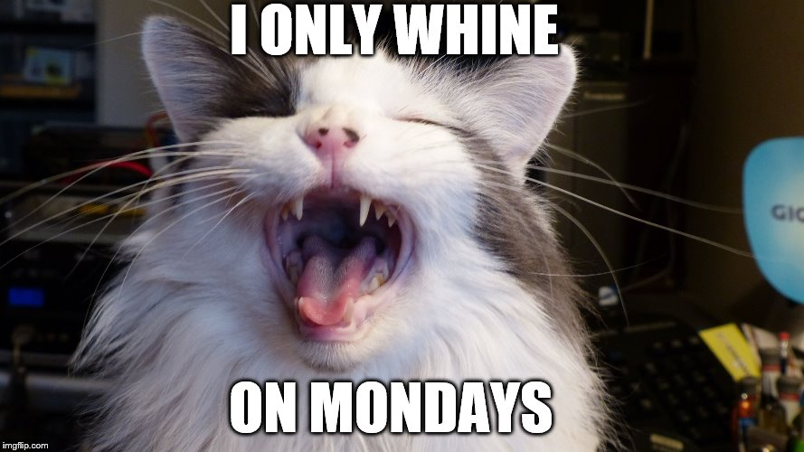 Cat whining that it is monday | I ONLY WHINE ON MONDAYS | image tagged in cat yelling,monday,mondays,monday mornings,funny cats | made w/ Imgflip meme maker