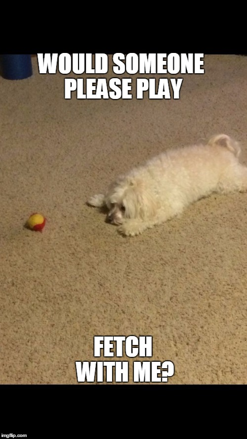 WOULD SOMEONE PLEASE PLAY; FETCH WITH ME? | image tagged in hooper | made w/ Imgflip meme maker