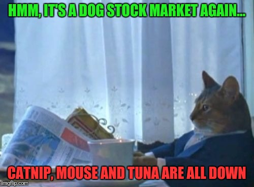 Can't Buy A Boat Cat | HMM, IT'S A DOG STOCK MARKET AGAIN... CATNIP, MOUSE AND TUNA ARE ALL DOWN | image tagged in memes,i should buy a boat cat,stocks,stock crash | made w/ Imgflip meme maker