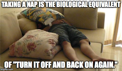 "Sleeping on Couch | TAKING A NAP IS THE BIOLOGICAL EQUIVALENT OF ""TURN IT OFF AND BACK ON AGAIN."" 