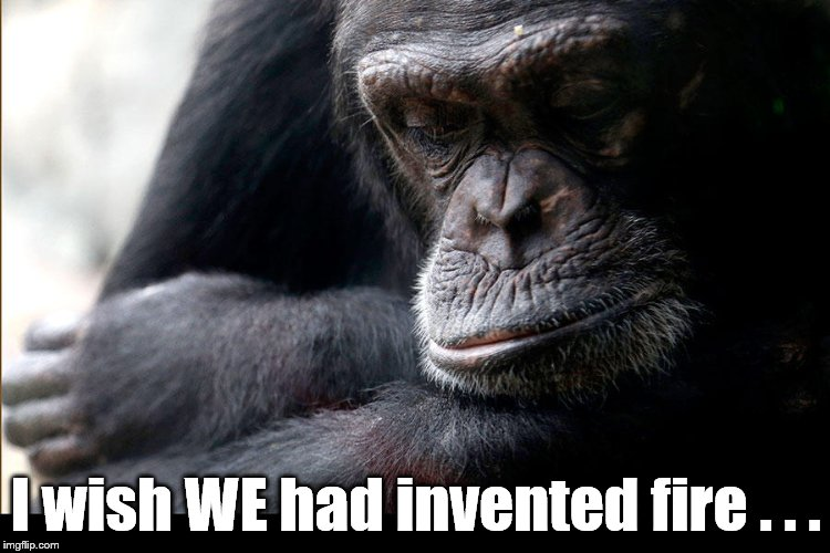 Everything would be so different now if only... | I wish WE had invented fire . . . | image tagged in koko,fire,wish,ape,everything would be so different | made w/ Imgflip meme maker