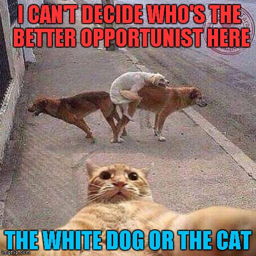 There's something to be said about seizing an opportunity... | I CAN'T DECIDE WHO'S THE BETTER OPPORTUNIST HERE THE WHITE DOG OR THE CAT | image tagged in cat selfie,memes,animals,funny animals,funny,cats  dogs | made w/ Imgflip meme maker