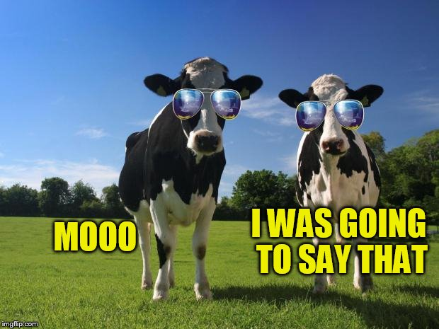 cool cows | MOOO I WAS GOING TO SAY THAT | image tagged in cool cows | made w/ Imgflip meme maker