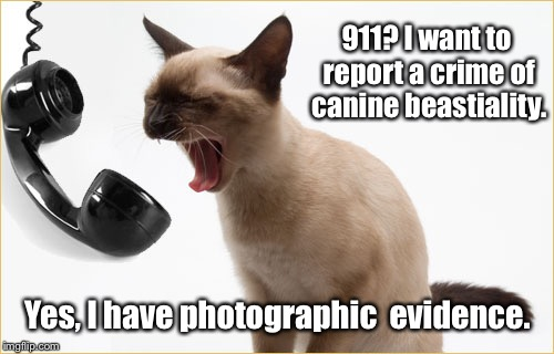 911? I want to report a crime of canine beastiality. Yes, I have photographic  evidence. | made w/ Imgflip meme maker