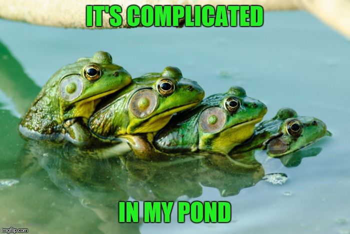 IT'S COMPLICATED IN MY POND | made w/ Imgflip meme maker