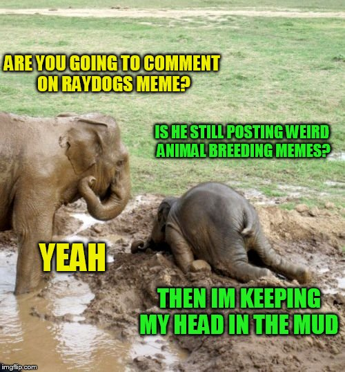 ARE YOU GOING TO COMMENT ON RAYDOGS MEME? IS HE STILL POSTING WEIRD ANIMAL BREEDING MEMES? YEAH THEN IM KEEPING MY HEAD IN THE MUD | made w/ Imgflip meme maker