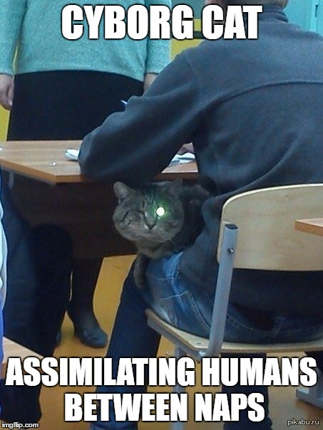 Cyborg Cat | CYBORG CAT ASSIMILATING HUMANS BETWEEN NAPS | image tagged in cyborg,cat,kitty | made w/ Imgflip meme maker