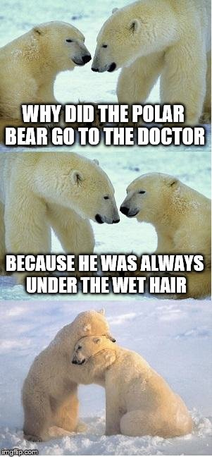 Polar bear finding neverland |  WHY DID THE POLAR BEAR GO TO THE DOCTOR; BECAUSE HE WAS ALWAYS UNDER THE WET HAIR | image tagged in polar bear finding neverland | made w/ Imgflip meme maker
