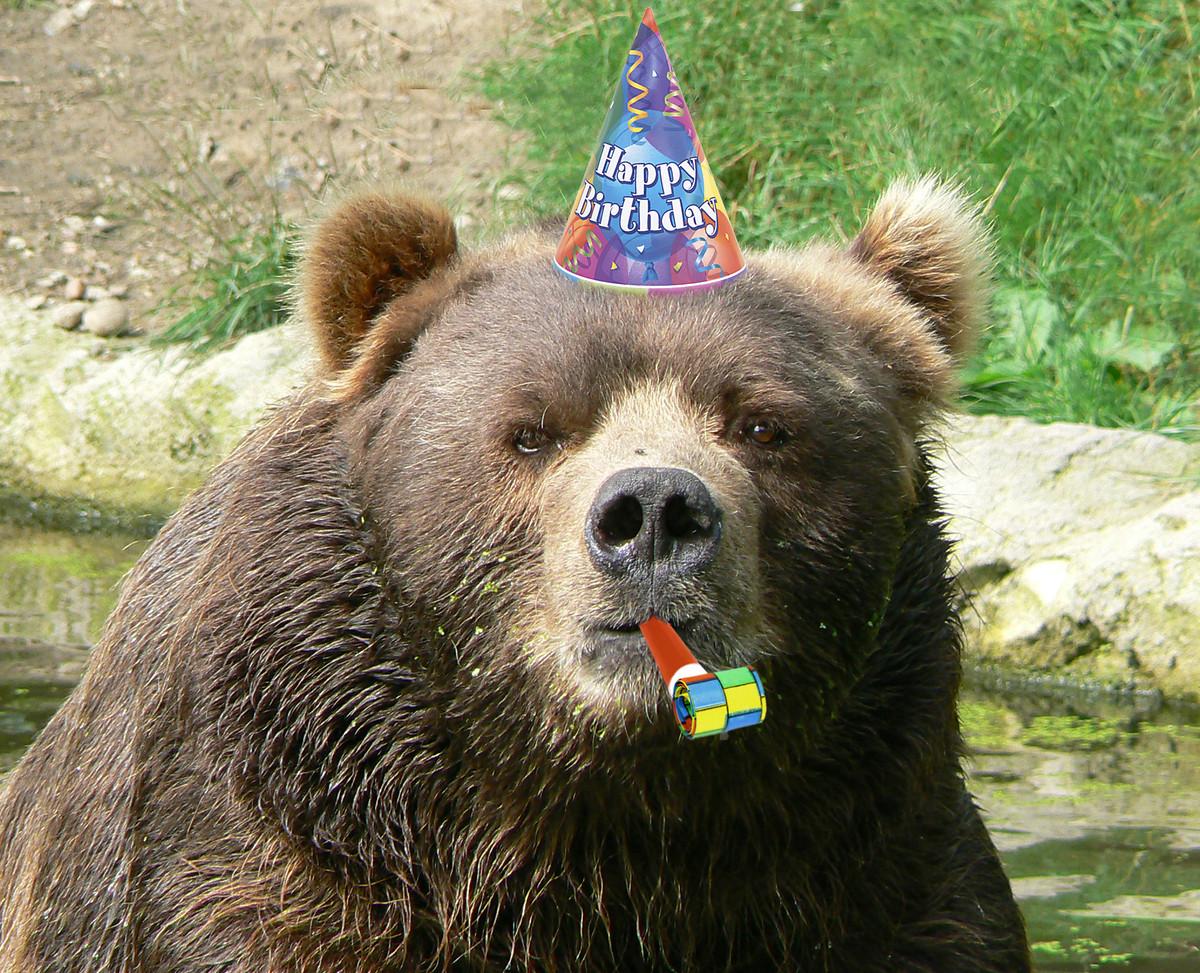bear birthday Happy Birthday Bear Blank Template   Imgflip bear birthday