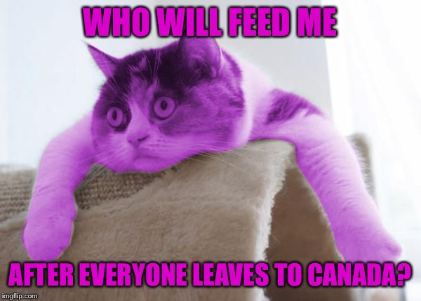 RayCat Stare | WHO WILL FEED ME AFTER EVERYONE LEAVES TO CANADA? | image tagged in raycat stare,memes | made w/ Imgflip meme maker